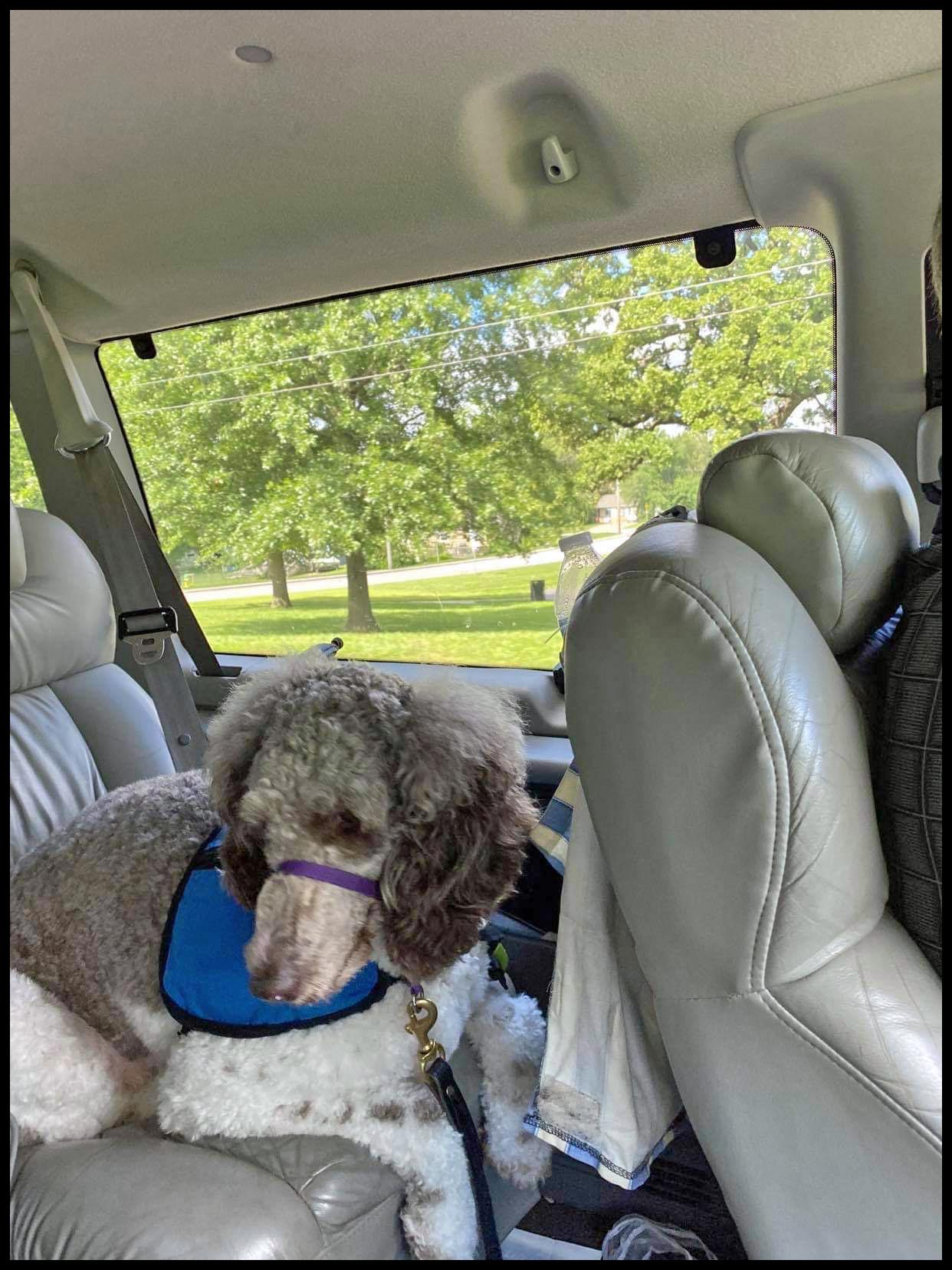 Bandit in the Van