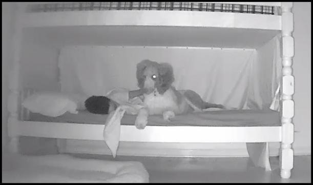 JJ and Bandit Bedtime
